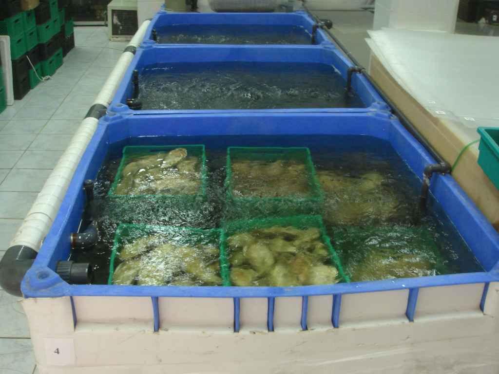 Промышленные аквариумы